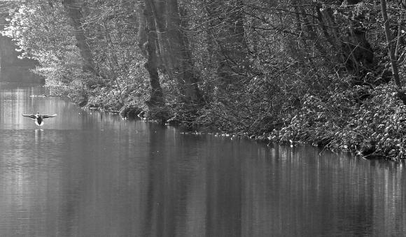 Huddersfield Narrow Canal, 22/3/15