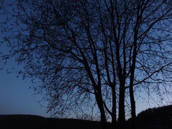 Tree at dusk, 14/4/15