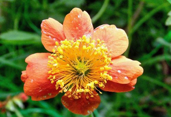 Pollen laden, 6/6/15