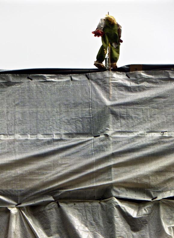 Scaffolding scarecrow, 13/6/15