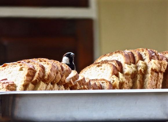 Bird and bread, 5/8/15