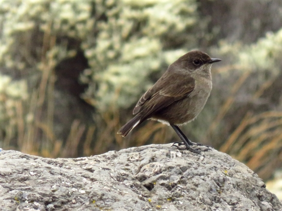Bird in Karanga valley, 31/7/15