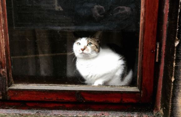 Cat behind window, 9/11/15