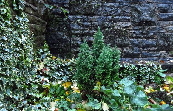 Leafy corner, 30/11/15