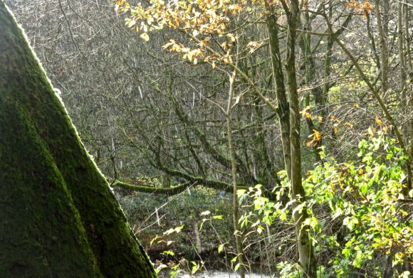 Rain shower, woods, 16/11/15