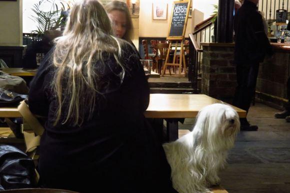 Dog/owner couple, 12/1/16
