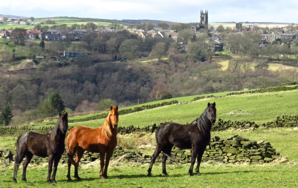 Horses and Heptonstall, 27/3/16