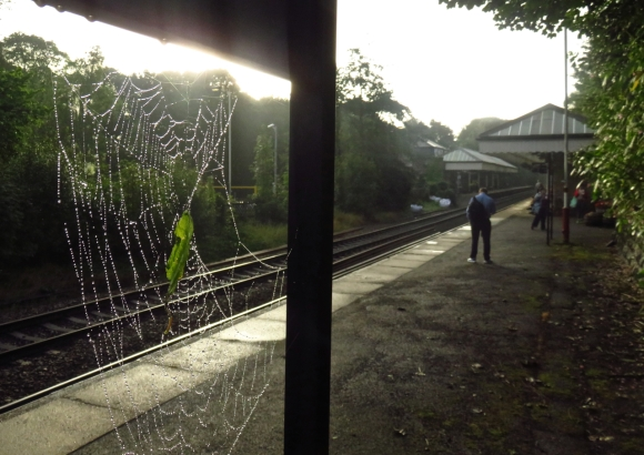 Spider web, HB station, 23/8/16