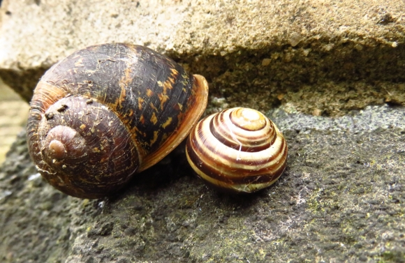 Intimate snails, 28/10/16