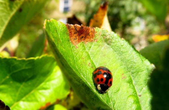 Snug bug, 19/10/16