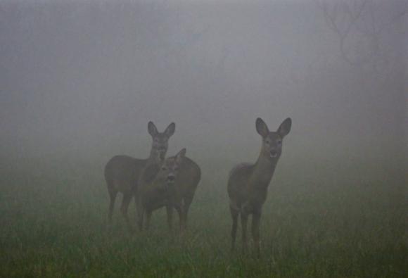 Deer, 17/12/16