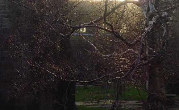 Tree, Heptonstall, 26/12/16