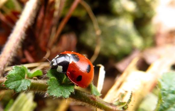 Ladybird, 19/2/17