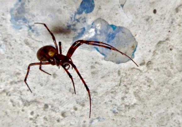 Cave spider, 22/5/17
