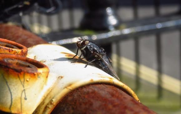 Fly, 18/7/17
