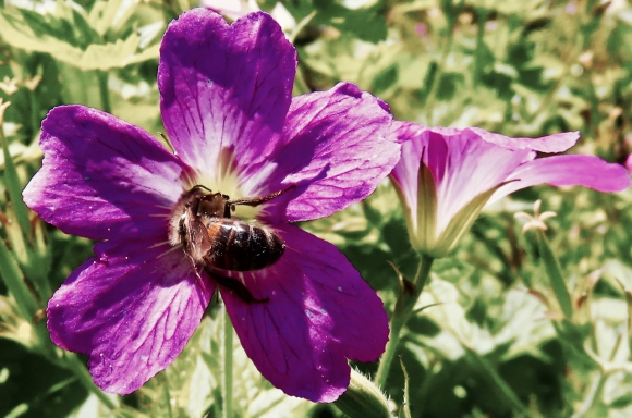 Nectar, 16/7/17