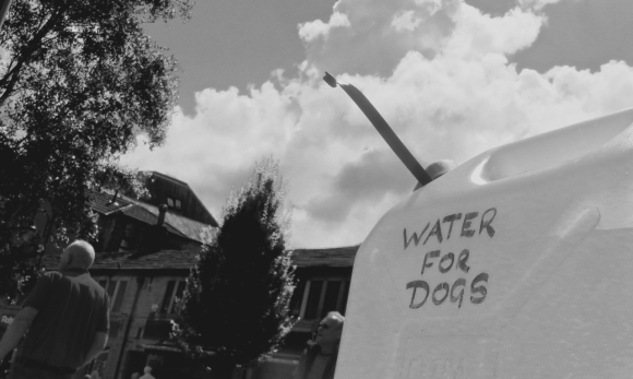 Water for dogs, 22/7/17