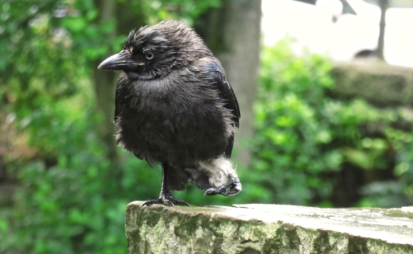 Shaggy bird, 3/8/17