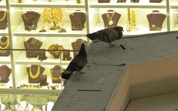 Sheremetyevo pigeons, 25/10/17