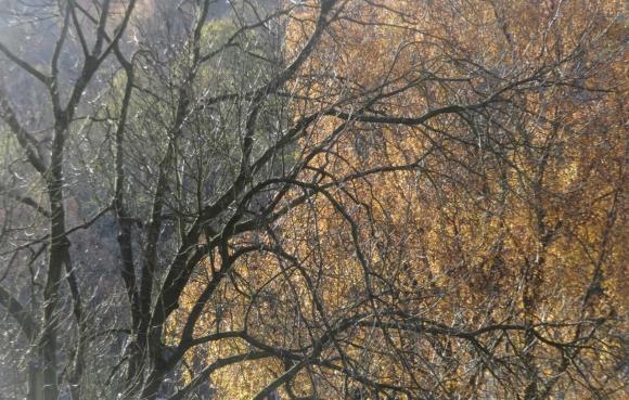 Trees, 19/11/17