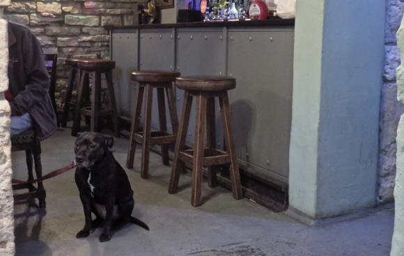 Waiting dog, 28/1/18