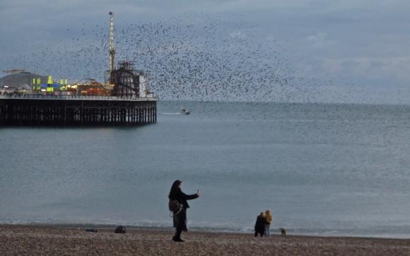 Brighton beach starlings, 4/2/18