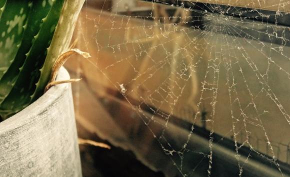 Cobweb, 12/3/18