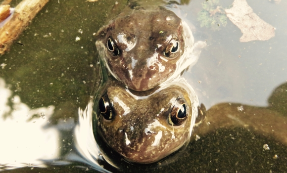 Frog friends, 25/3/18