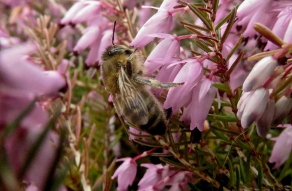 Pollination, 11/3/18