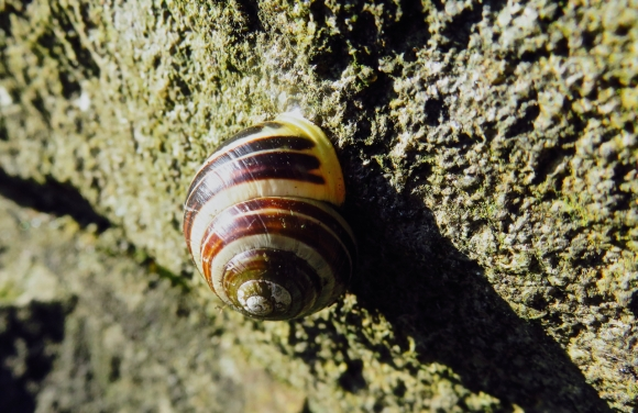 Snail on wall, 1/5/18