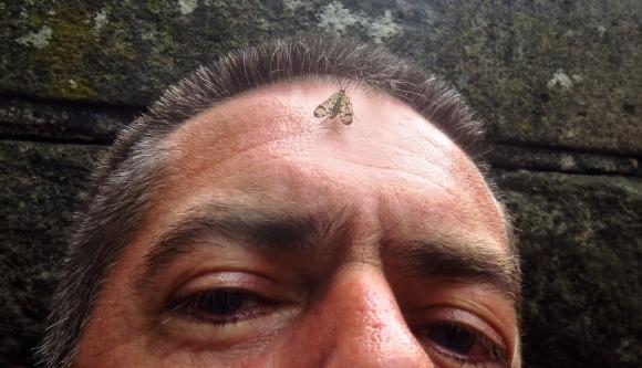 Self-portrait with moth, 1/6/18