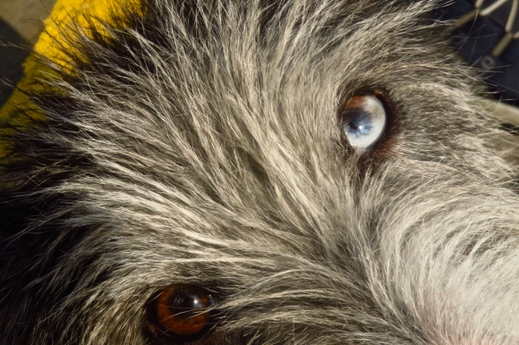 Finn the dog, 26/7/18