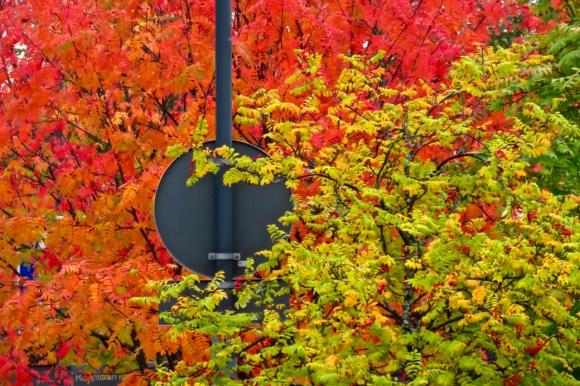 Oulu foliage, 24/9/18