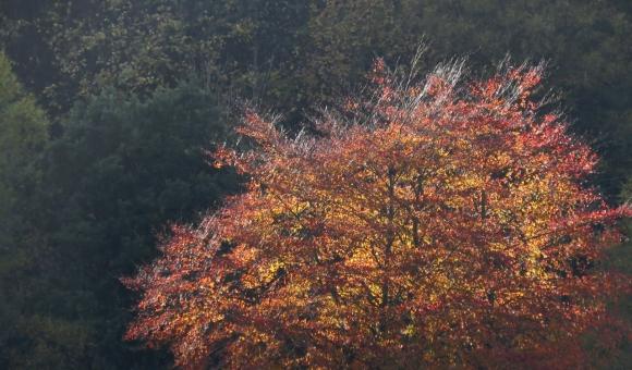 Autumn ablaze, 28/10/18