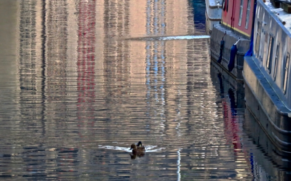Ducks and barges, 11/12/18