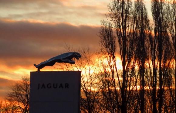 Leaping jaguar, 11/2/19