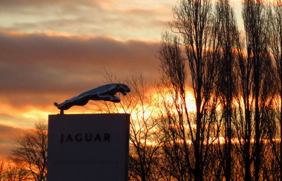 Leaping jaguar, 11/2/19