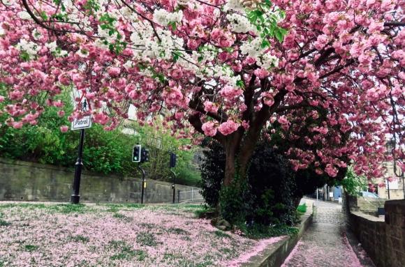 Blossom ceiling, 25/4/19
