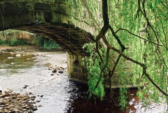 Willow and bridge, 28/4/19