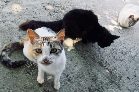 Taverna cats, 7/6/19