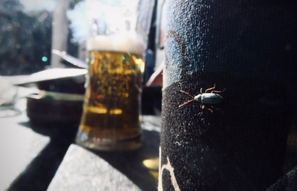 Turquiose bug, 27/6/19