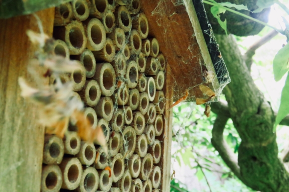 Bee house, 30/6/19