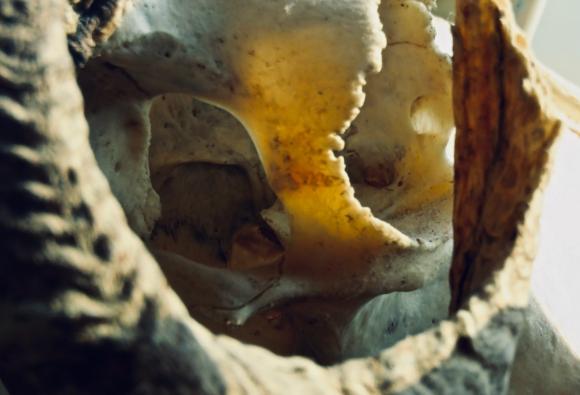 Bone cave, 16/7/19