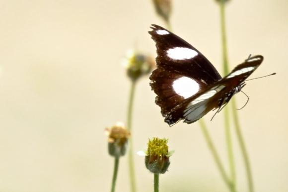 Butterfly in flight, 27/11/19