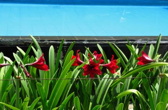 Kayu Arum flowers, 29/11/19