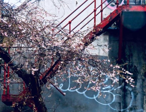 Winter blossom, 10/12/19