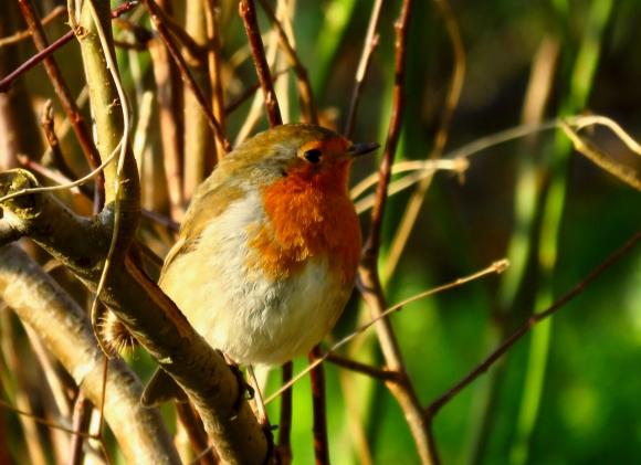 Robin, 1/1/20