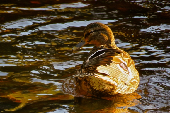 Smiley duck, 3/1/20