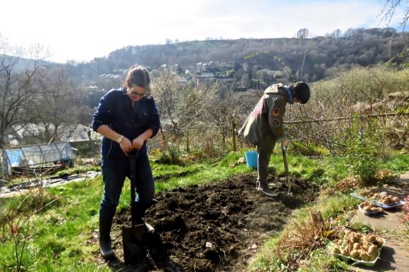 Planting potatoes, 22/3/20