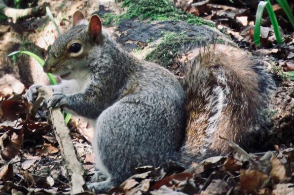 Squirrel, 10/4/20